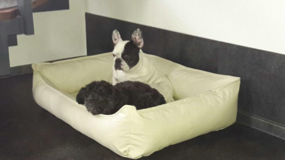 Benny und Laika im Hundebett Cozy Kunstleder Visko