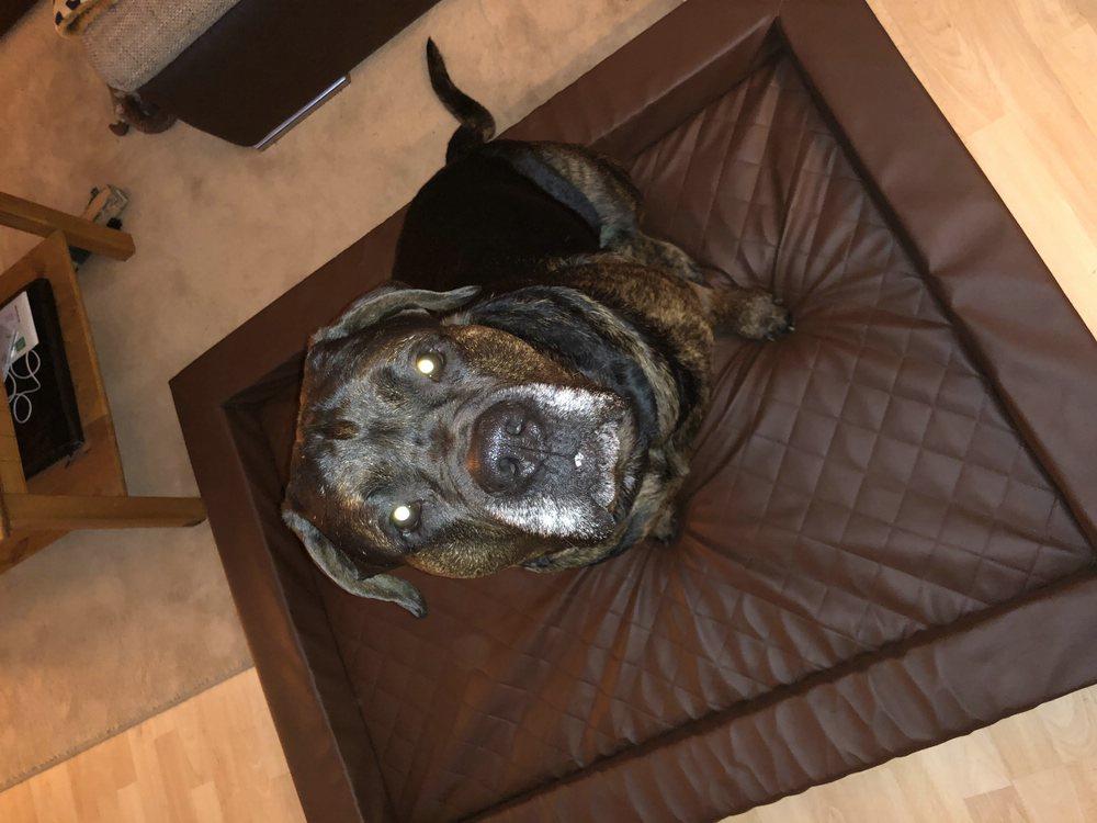 Hundebett Compact gesteppt Kunstleder Visko