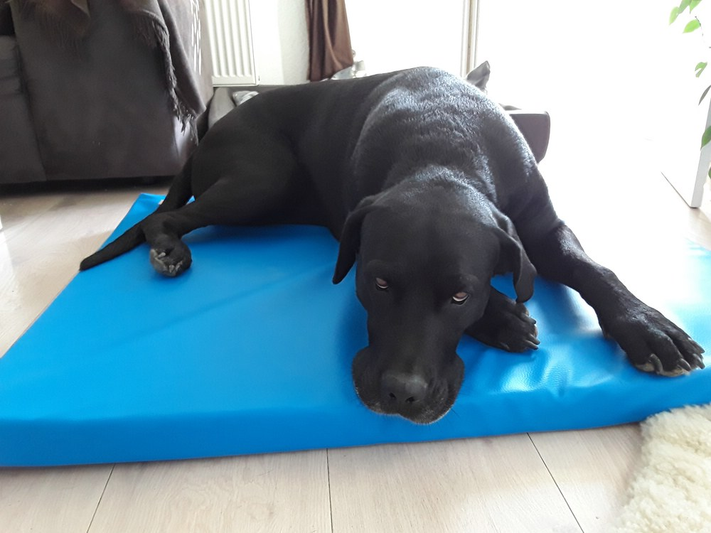 Hundematte Perfect Kunstleder blau